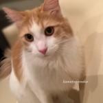 ソファ猫3
