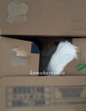ダンボール猫1