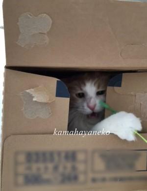 ダンボール猫2