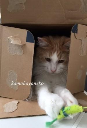 ダンボール猫4