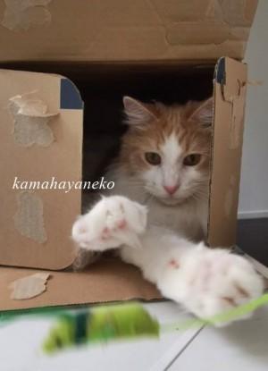 ダンボール猫7