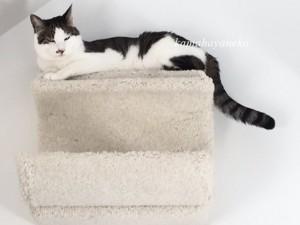 下りない猫2