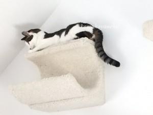 下りない猫3