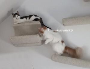 下りない猫5
