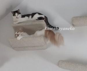 下りない猫6