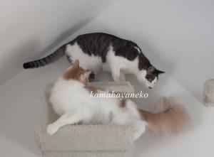 下りない猫9