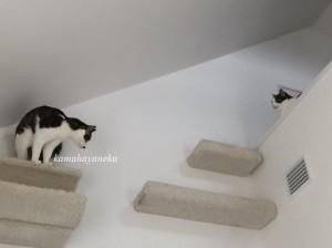 下りる猫2
