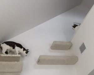 下りる猫3