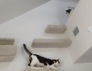 下りる猫4