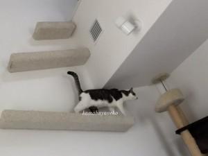 下りる猫5