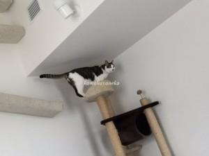 下りる猫6