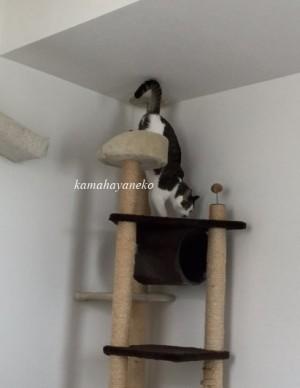 下りる猫7