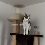 下りる猫8