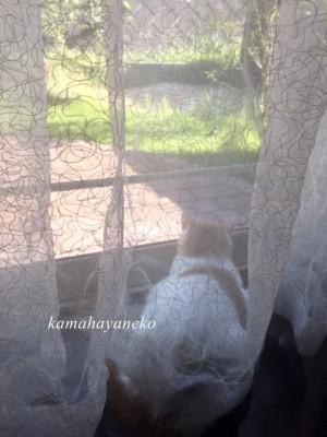 庭を見る猫1
