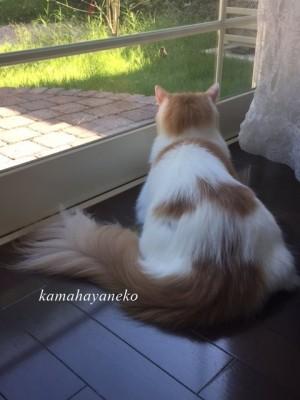 庭を見る猫4