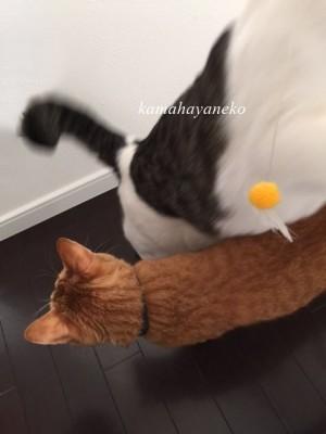 猫あそび10