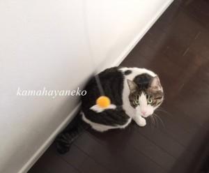 猫あそび2