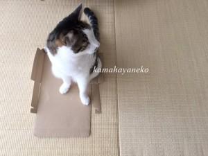 猫まんま1