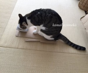 猫まんま3