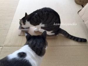 猫まんま5