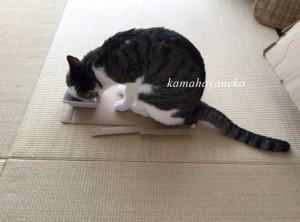 猫まんま7