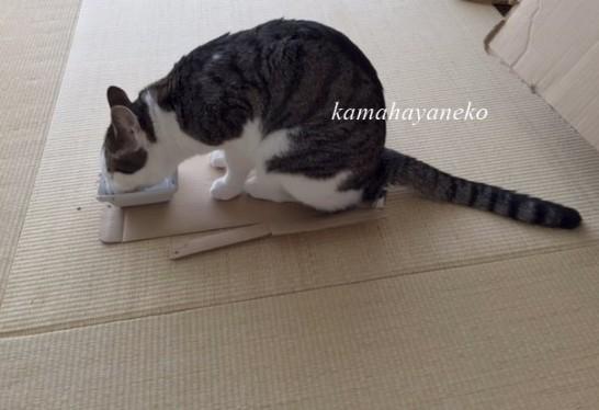 猫まんま8