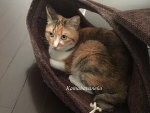 猫タワーのカバー4