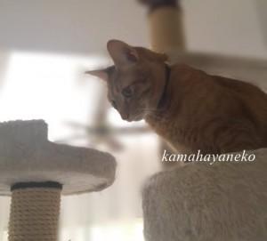 猫タワー5