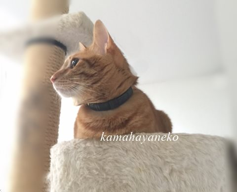 猫タワー7