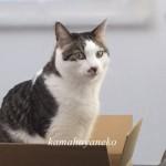 猫ダンボール8