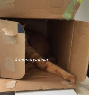 続ダンボール猫1