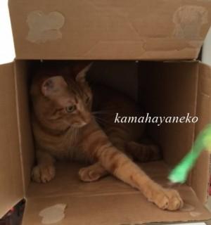 続ダンボール猫2