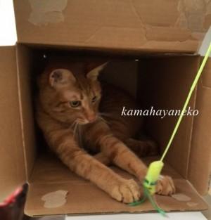 続ダンボール猫3