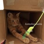 続ダンボール猫4