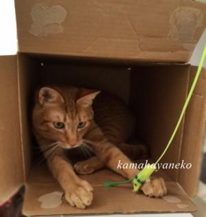 続ダンボール猫5