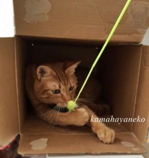 続ダンボール猫6