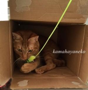続ダンボール猫7