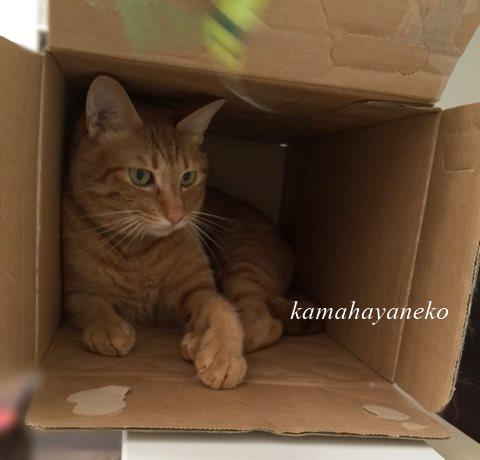 続ダンボール猫8