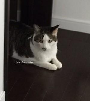 猫の便秘5
