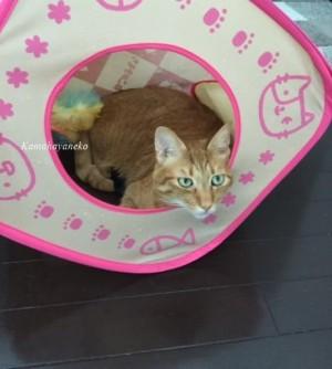 猫キューブ1