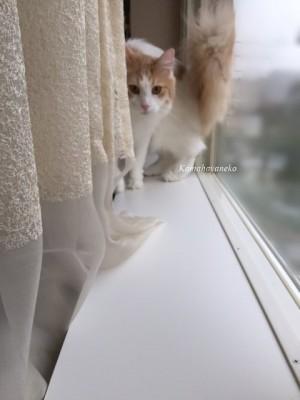 窓際ミサッキー1
