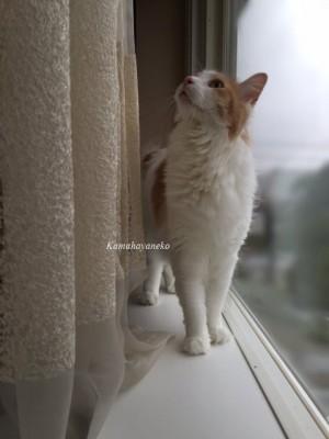 窓際ミサッキー3