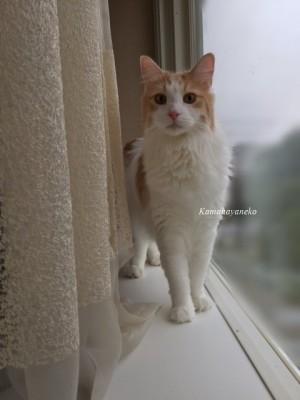 窓際ミサッキー4