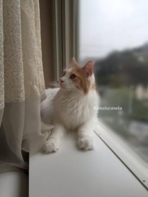 窓際ミサッキー6
