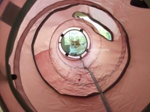 トンネル猫1