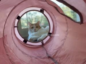 トンネル猫2