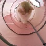トンネル猫7
