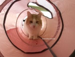 トンネル猫8