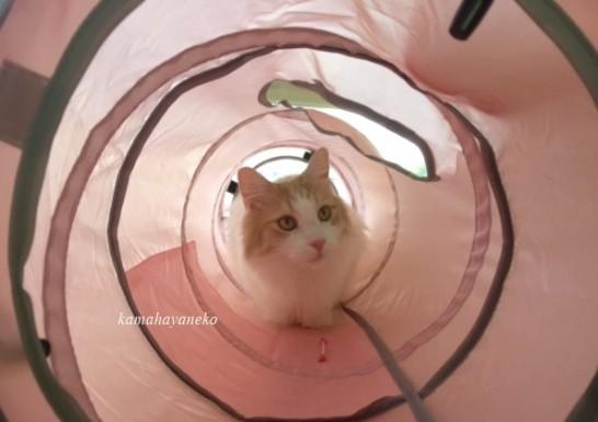 トンネル猫9