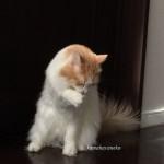 毛づくろいミサッキー6